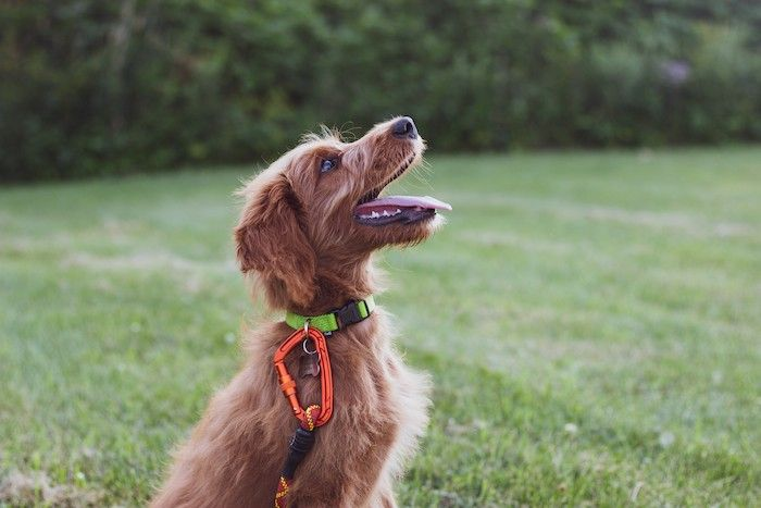 body language to help your dog behave