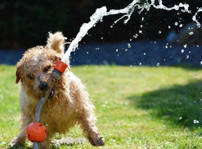 dog water play